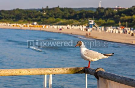 Animals: Seagull on a pier with Baltic Sea beach on the background #05823