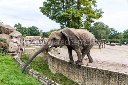 Animals: African elephant in Tierpark Berlin Germany #05826