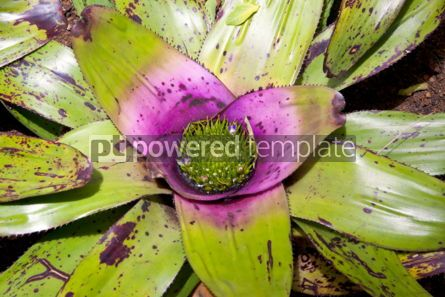 Nature: Green Water Lily flower #05891