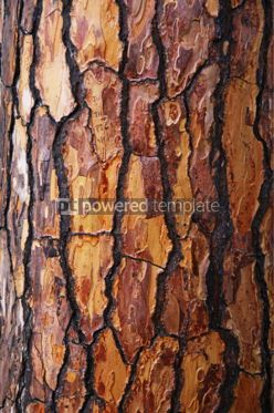 Nature: Brown bark of pine tree #06948