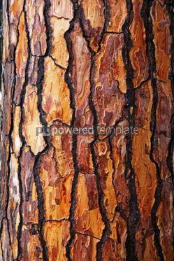 Nature: Brown bark of pine tree #06949