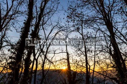 Nature: Tree branches silhouette against sunset background #06976