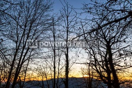 Nature: Tree branches silhouette against sunset background #06977