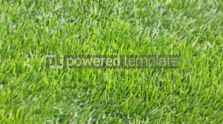 Sports : Close-up green grass soccer field #07004