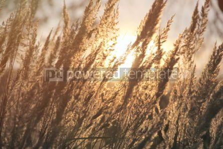 Nature: Close-up dry grass field over setting sun background #07088