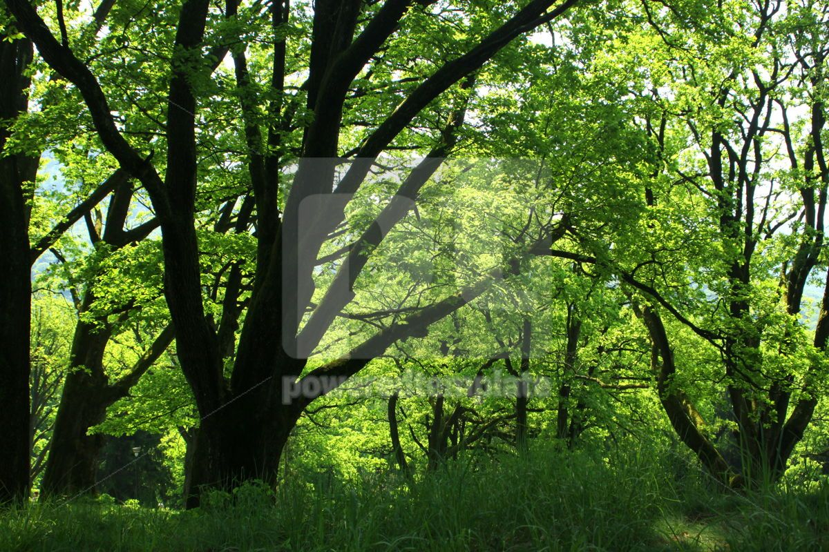 Summer forest with green grass and trees, 07102, Nature — PoweredTemplate.com