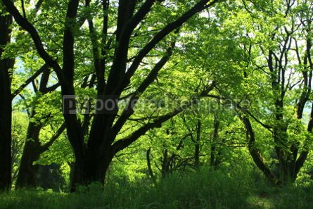 Nature: Summer forest with green grass and trees #07102