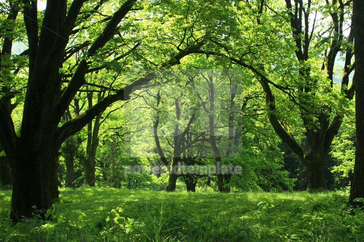 Summer forest with green grass and trees, 07103, Nature — PoweredTemplate.com