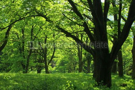 Nature: Summer forest with green grass and trees #07104
