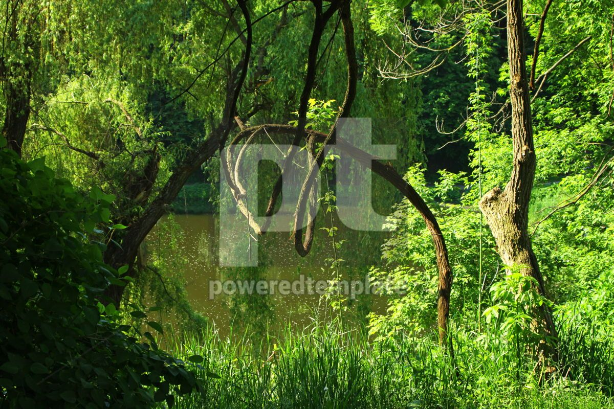 Summer forest with green trees grass and small lake, 07105, Nature — PoweredTemplate.com
