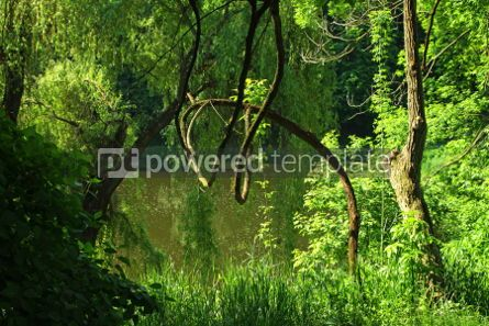 Nature: Summer forest with green trees grass and small lake #07105