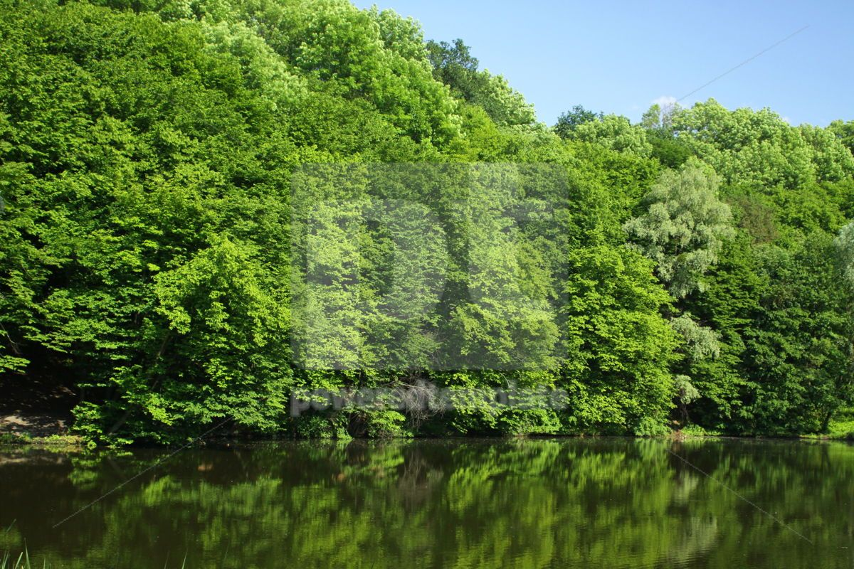 Summer forest with green trees and small lake, 07106, Nature — PoweredTemplate.com