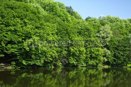 Nature: Summer forest with green trees and small lake #07106