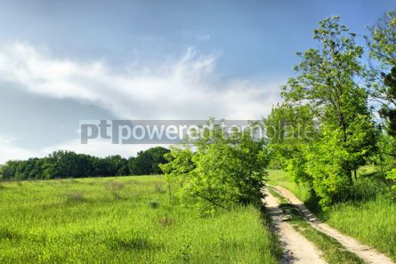 Nature: Walkway on a summer meadow #07109