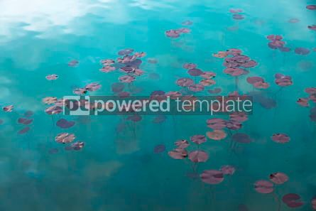 Nature: Watel Lily plants in the water #07114