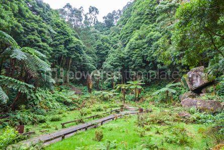 Nature: Natural Park Caldeira Velha on Sao Miguel island Azores Portug #07863