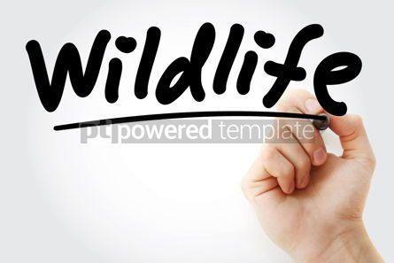 Business: Hand writing Wildlife with marker #08327