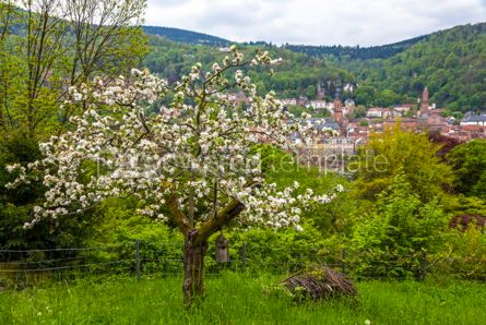 Nature: Heidelberg city in spring Baden-Wurttemberg Germany #09778