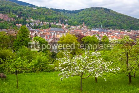 Nature: Heidelberg city in spring Baden-Wurttemberg Germany #09779