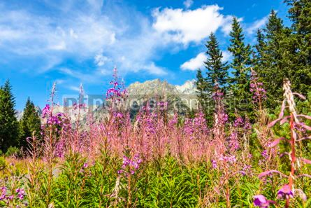 Nature: Picturesque view of Tatra mountains Slovakia #09785