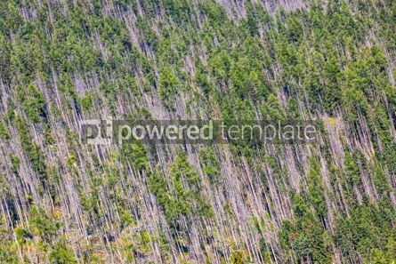 Nature: Aerial view of coniferous forest in High Tatras mountains #09788