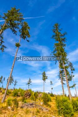Nature: Broken forest in Tatra mountains Slovakia #09789