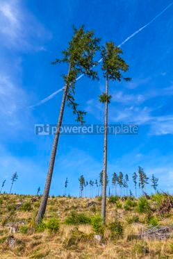 Nature: Broken forest in Tatra mountains Slovakia #09790