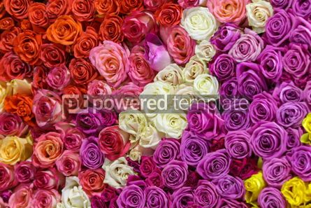 Nature: Beautiful wall made of colourful roses #12347