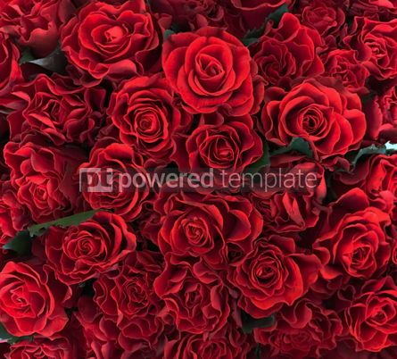 Holidays: Background with a lot of beautiful red roses #12503