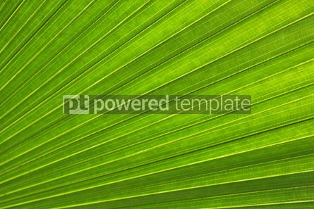 Nature: Texture of the palm leaf #12509