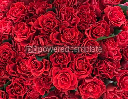 Holidays: Charming background with red roses Valentine's day background #12510