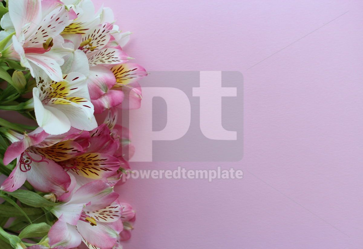 Beautiful pink summer card with close-up pink and white alstroemeria flowers, 13312, Holidays — PoweredTemplate.com