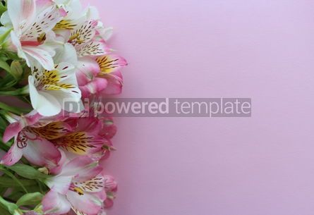 Holidays: Beautiful pink summer card with close-up pink and white alstroemeria flowers #13312