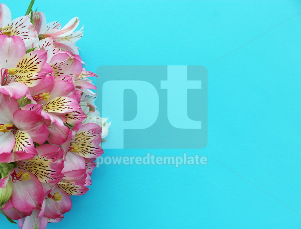 Pink alstroemeria flowers on light blue background, 13313, Holidays — PoweredTemplate.com
