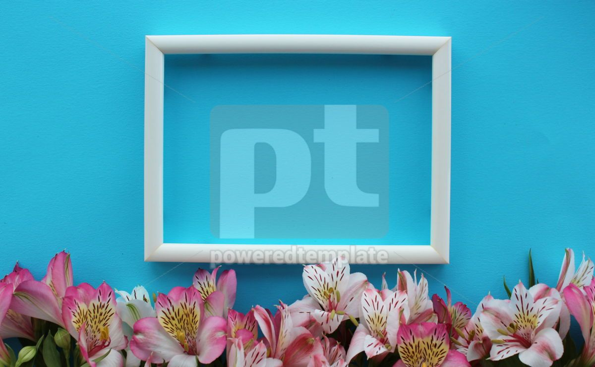 Beautiful azure background with white frame and summer pink and white alstroemeria flowers, 13325, Nature — PoweredTemplate.com