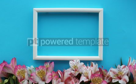 Nature: Beautiful azure background with white frame and summer pink and white alstroemeria flowers #13325