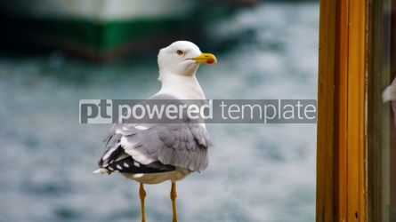 Animals: Western Gull Bird in Turkey #13395