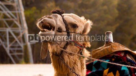 Animals: Camel in the Zoo - Amman - Jordan #13396