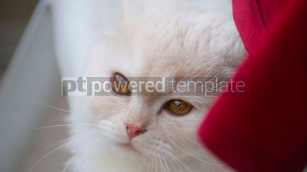 Animals: Pretty White Pussy Cat with Red Clothe #13397
