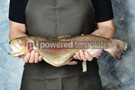 Food & Drink: Raw wild whole trout salmon in male hands #13848