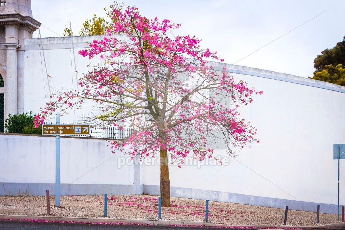 Silk floss tree on the street of Lisbon city Portugal, 15417, Nature — PoweredTemplate.com
