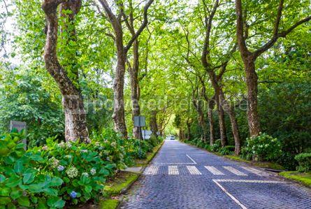 Nature: Shady cobblestone road on Sao Miguel island Azores Portugal #15427