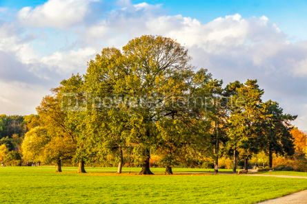 Nature: Rosenthal forest park in Leipzig city Saxony Germany #15428