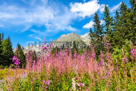 Nature: Picturesque view of Tatra mountains Slovakia #15520