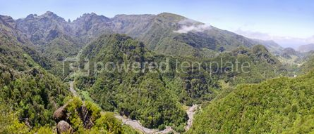 Nature: Laurel forest on Madeira island Portugal #15552