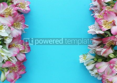 Nature: Beautiful azure background with pink and white alstroemeria flowers #15895