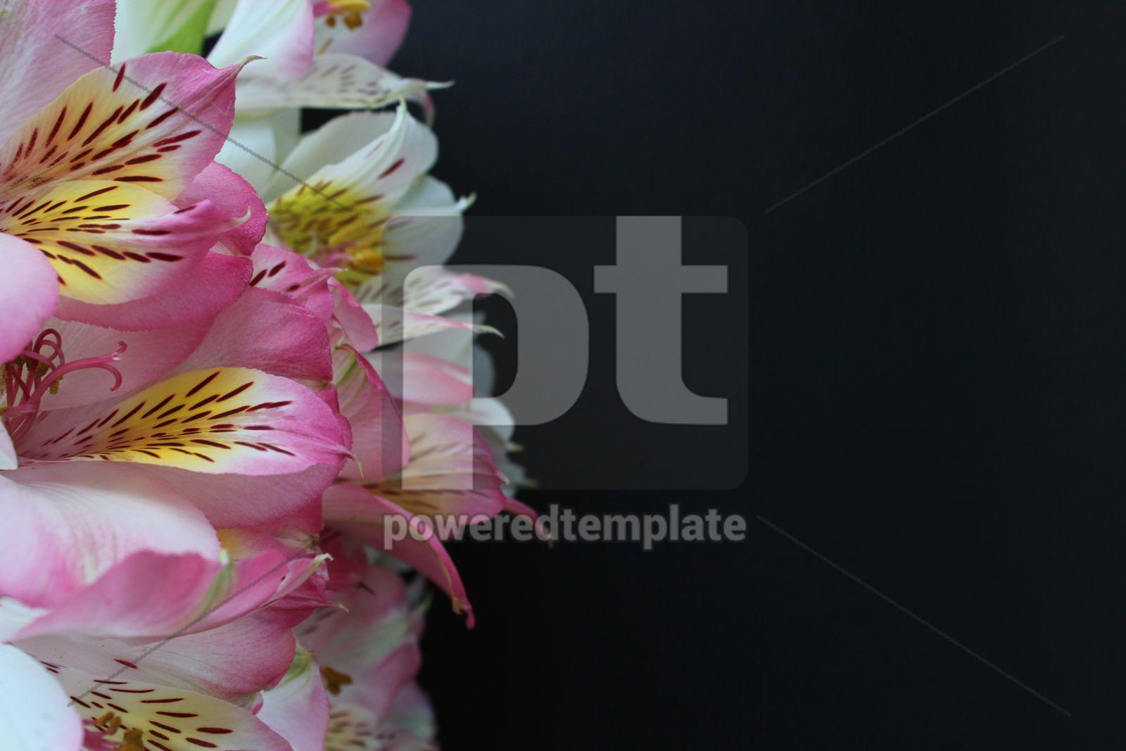 Closeup alstroemeria flowers on black background, 16390, Holidays — PoweredTemplate.com