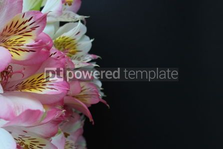 Holidays: Closeup alstroemeria flowers on black background #16390