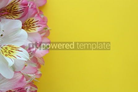 Holidays: Beautiful flowers on yellow summer background #16391