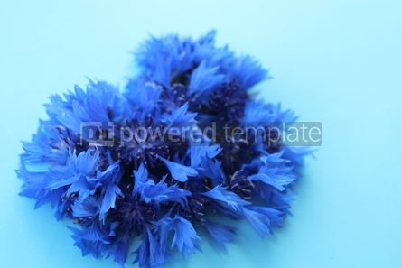 Holidays: Heart symbol made of cornflower #16393